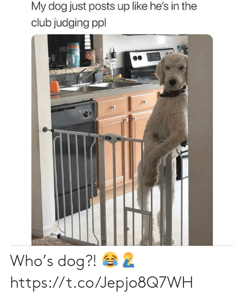 In The Club: My dog just posts up like he's in the  club judging ppl Who's dog?! 😂🤦♂️ https://t.co/Jepjo8Q7WH