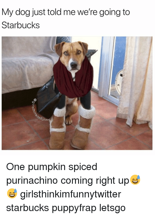Funny, Starbucks, and Pumpkin: My dog just told me we're going to  Starbucks  funny One pumpkin spiced purinachino coming right up😅😅 girlsthinkimfunnytwitter starbucks puppyfrap letsgo