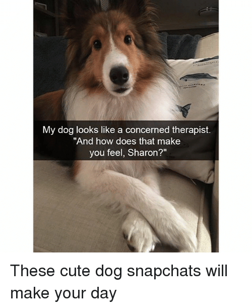 "Cute, Funny, and How: My dog looks like a concerned therapist.  ""And how does that make  you feel, Sharon?"" These cute dog snapchats will make your day"