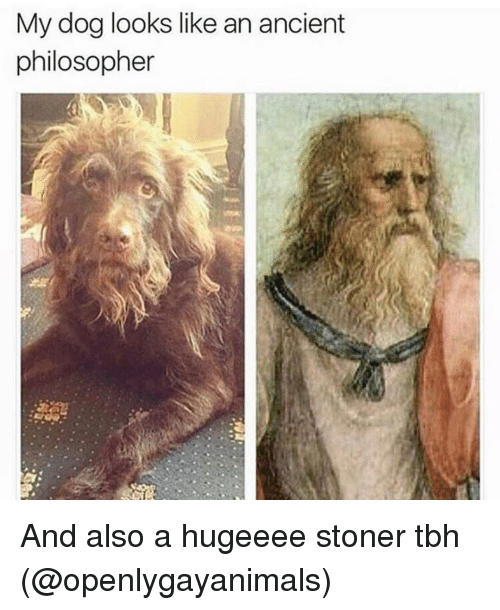 Philosophically: My dog looks like an ancient  philosopher And also a hugeeee stoner tbh (@openlygayanimals)