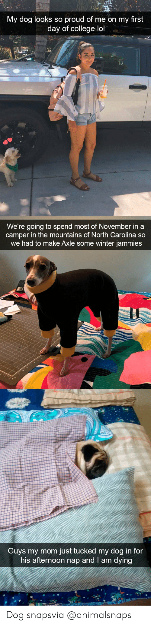 College, Lol, and Target: My dog looks so proud of me on my first  day of college lol   We're going to spend most of November in a  camper in the mountains of North Carolina so  we had to make Axle some winter jammies   Guvs my mom just tucked my dog in for  his afternoon nap and I am dying Dog snapsvia @animalsnaps