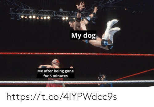 Memes, 🤖, and Dog: My dog  Me after being gone  for 5 minutes https://t.co/4IYPWdcc9s