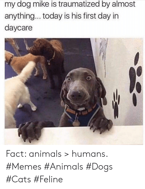 Animals, Cats, and Dogs: my dog mike is traumatized by almost  anything... today is his first day in  daycare Fact: animals > humans. #Memes #Animals #Dogs #Cats #Feline