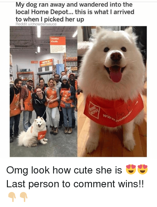 Cute, Memes, and Omg: My dog ran away and wandered into the  local Home Depot...this is what I arrived  to when I picked her up  Reddit u/chowdersauce Omg look how cute she is 😍😍 Last person to comment wins!! 👇🏼👇🏼