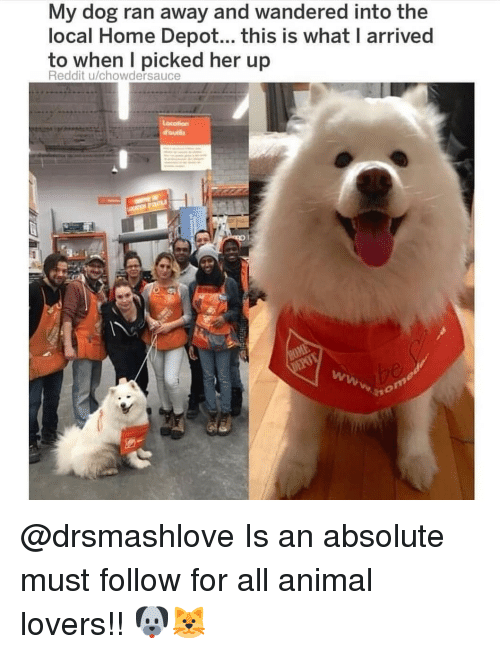 Memes, Reddit, and Animal: My dog ran away and wandered into the  local Home Depot... this is what I arrived  to when I picked her up  Reddit u/chowdersauce  dounle @drsmashlove Is an absolute must follow for all animal lovers!! 🐶🐱