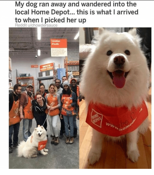 Reddit, Home, and Home Depot: My dog ran away and wandered into the  local Home Depot... this is what I arrived  to when I picked her up  Reddit u/chowdersauce
