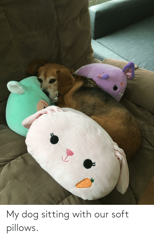 pillows: My dog sitting with our soft pillows.
