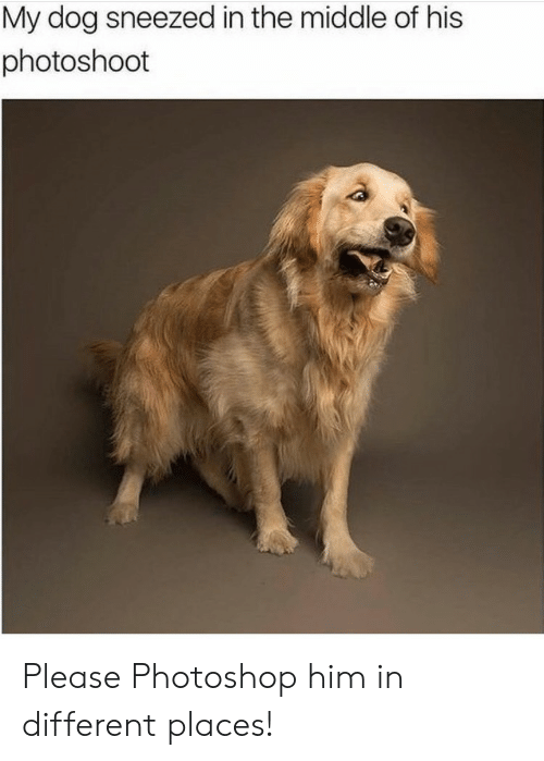 Photoshop, The Middle, and Dog: My dog sneezed in the middle of his  photoshoot Please Photoshop him in different places!
