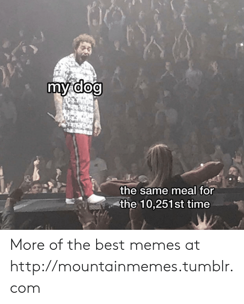 Memes, Tumblr, and Best: my dog  the same meal for  the 10,251st time More of the best memes at http://mountainmemes.tumblr.com
