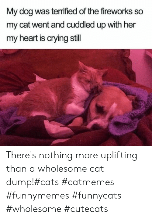 Cats, Crying, and Fireworks: My dog was terrified of the fireworks so  my cat went and cuddled up with her  my heart is crying still There's nothing more uplifting than a wholesome cat dump!#cats #catmemes #funnymemes #funnycats #wholesome #cutecats