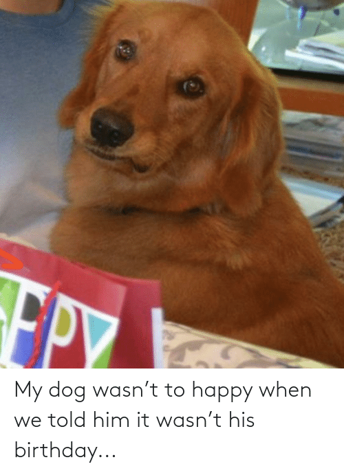 Told: My dog wasn't to happy when we told him it wasn't his birthday...