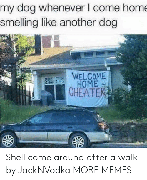 smelling: my dog whenever I come hom  smelling like another dog  WELCOME  HOME  CHEATE Shell come around after a walk by JackNVodka MORE MEMES