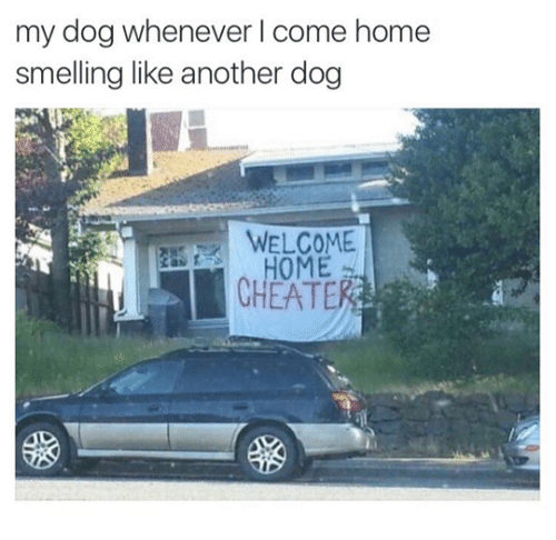 smelling: my dog whenever l come home  smelling like another dog  HOME  CHEATE