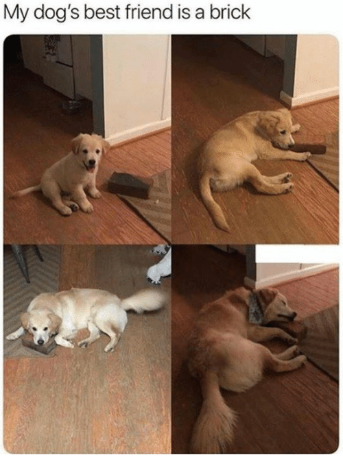 Best Friend, Dank, and Dogs: My dog's best friend is a brick