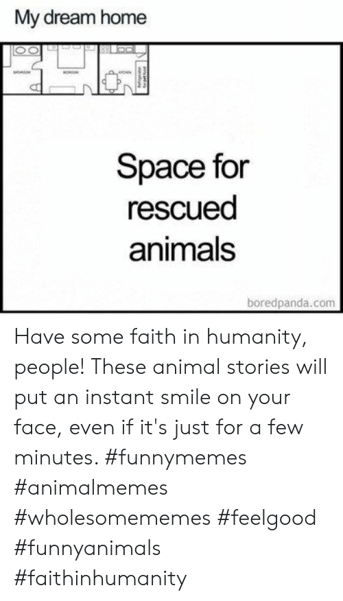 Faith In Humanity: My dream home  Space for  rescued  animals  boredpanda.com  g Have some faith in humanity, people! These animal stories will put an instant smile on your face, even if it's just for a few minutes. #funnymemes #animalmemes #wholesomememes #feelgood #funnyanimals #faithinhumanity