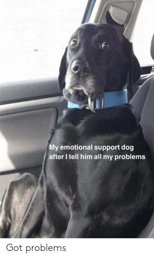 Got, Dog, and Him: My emotional support dog  after I tell him all my problems Got problems