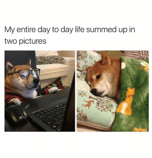 Dogs, Life, and Pictures: My entire day to day life summed up in  two pictures