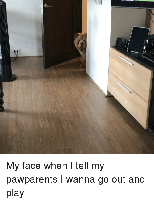 Memes, My Face When, and 🤖: My face when I tell my pawparents I wanna go out and play