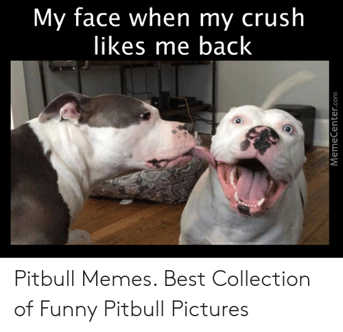 Funny Pitbull Pictures: My face when my crush  likes me back  MemeCenter.com Pitbull Memes. Best Collection of Funny Pitbull Pictures