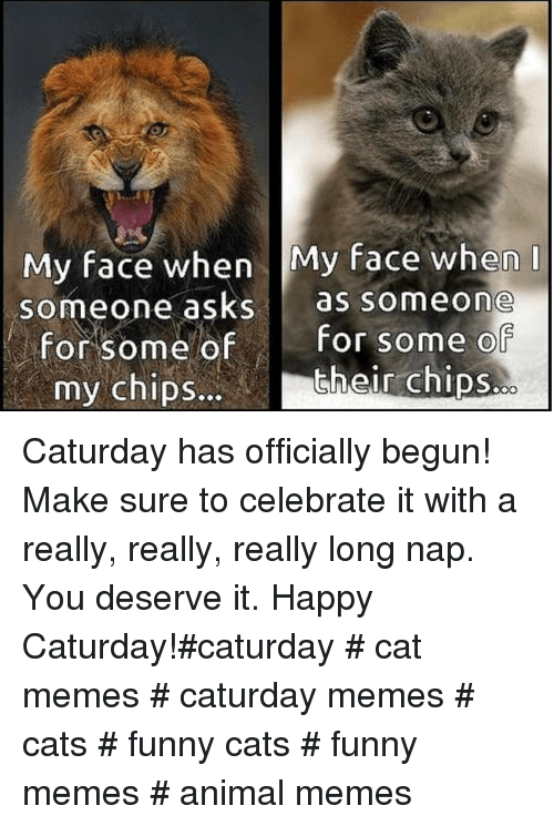 Cats, Caturday, and Funny: My face when My face when  someone asks as someone  for some ofFor some o  their chips.  my chipS... Caturday has officially begun! Make sure to celebrate it with a really, really, really long nap. You deserve it. Happy Caturday!#caturday # cat memes # caturday memes # cats # funny cats # funny memes # animal memes