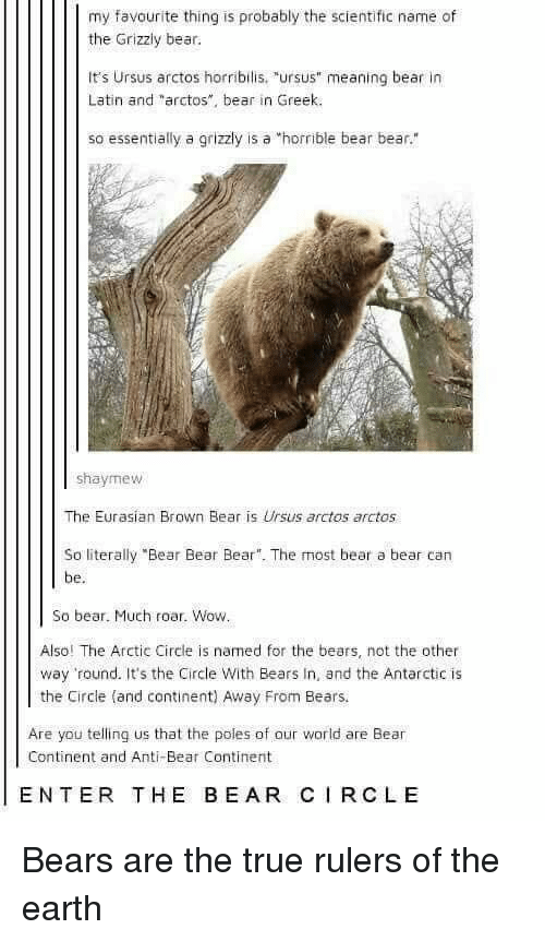 "True, Wow, and Bear: my favourite thing is probably the scientific name of  the Grizzly bear.  It's Ursus arctos horribilis. ""ursus"" meaning bear in  Latin and ""arctos"", bear in Greek.  so essentially a grizzly is a horrible bear bear.""  shaymew  The Eurasian Brown Bear is Ursus arctos arctos  So literally ""Bear Bear Bear. The most bear a bear can  be.  So bear. Much roar. Wow  Also! The Arctic Circle is named for the bears, not the other  way round. It's the Circle With Bears In, and the Antarctic is  the Circle (and continent) Away From Bears.  Are you telling us that the poles of aur world are Bear  Continent and Anti-Bear Continent  ENTER THE BEAR CIRCLE Bears are the true rulers of the earth"
