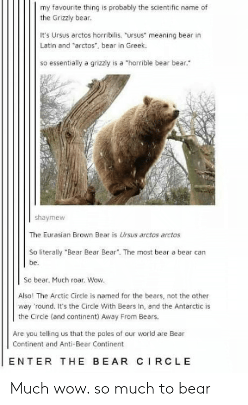 """Wow, Bear, and Bears: my favourite thing is probably the scientific name of  the Grizzly bear.  It's Ursus arctos horribilis. """"ursus meaning bear in  Latin and """"arctos, bear in Greek.  so essentially a grizzly is a """"horrible bear bear  shaymew  The Eurasian Brown Bear is Ursus arctos arctos  So literally """"Bear Bear Bear"""". The most bear a bear can  be.  So bear. Much roar. Wow  Also! The Arctic Circle is named for the bears, not the other  way round. It's the Circle With Bears In, and the Antarctic is  the Circle (and continent) Away From Bears.  Are you telling us that the poles of our world are Bear  Continent and Anti-Bear Continent  ENTER THE BEAR CIRCLE Much wow. so much to bear"""