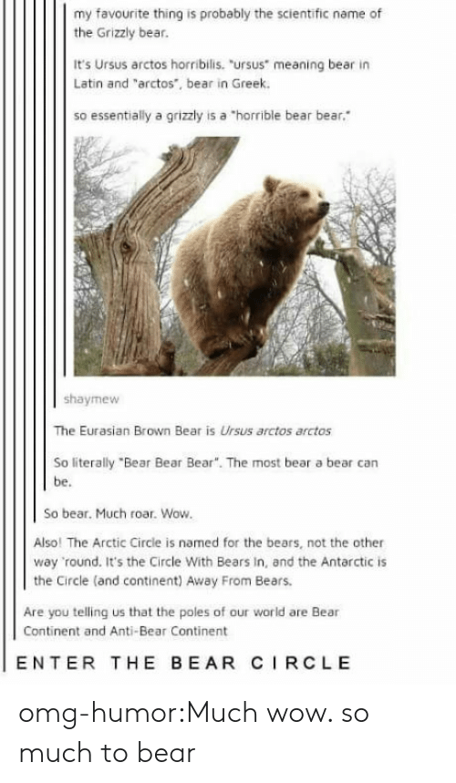 """Omg, Tumblr, and Wow: my favourite thing is probably the scientific name of  the Grizzly bear.  It's Ursus arctos horribilis. """"ursus meaning bear in  Latin and """"arctos, bear in Greek.  so essentially a grizzly is a """"horrible bear bear  shaymew  The Eurasian Brown Bear is Ursus arctos arctos  So literally """"Bear Bear Bear"""". The most bear a bear can  be.  So bear. Much roar. Wow  Also! The Arctic Circle is named for the bears, not the other  way round. It's the Circle With Bears In, and the Antarctic is  the Circle (and continent) Away From Bears.  Are you telling us that the poles of our world are Bear  Continent and Anti-Bear Continent  ENTER THE BEAR CIRCLE omg-humor:Much wow. so much to bear"""