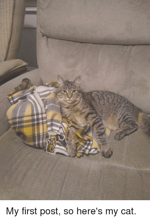 Cat, First, and Post