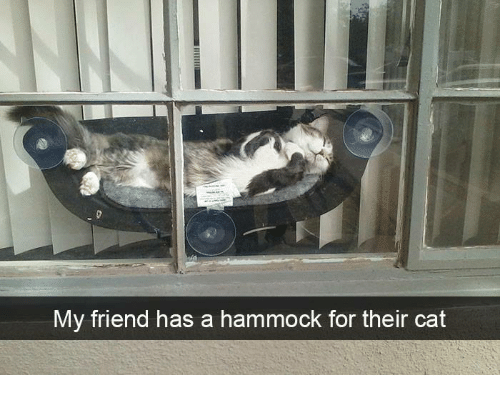 Memes, Hammock, and 🤖: My friend has a hammock for their cat