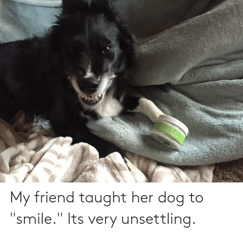 """unsettling: My friend taught her dog to """"smile."""" Its very unsettling."""