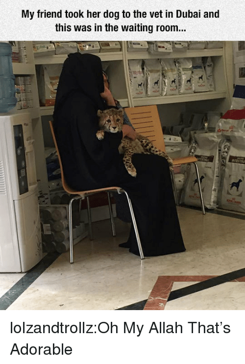 Tumblr, Blog, and Http: My friend took her dog to the vet in Dubai and  this was in the waiting room... lolzandtrollz:Oh My Allah That's Adorable