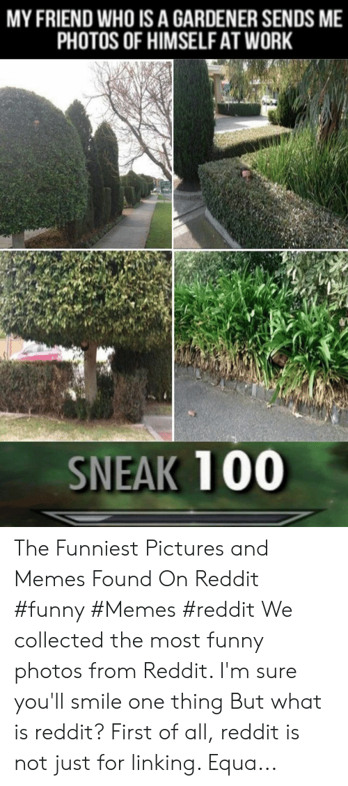 Funny, Memes, and Reddit: MY FRIEND WHO IS A GARDENER SENDS ME  PHOTOS OF HIMSELF AT WORK  SNEAK 100 The Funniest Pictures and Memes Found On Reddit #funny #Memes #reddit We collected the most funny photos from Reddit. I'm sure you'll smile one thing But what is reddit? First of all, reddit is not just for linking. Equa...