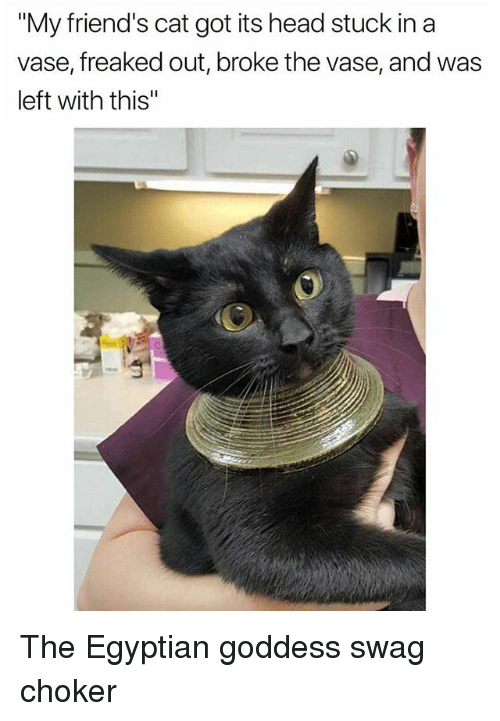 "Choker: ""My friend's cat got its head stuck in a  vase, freaked out, broke the vase, and was  left with this"" The Egyptian goddess swag choker"