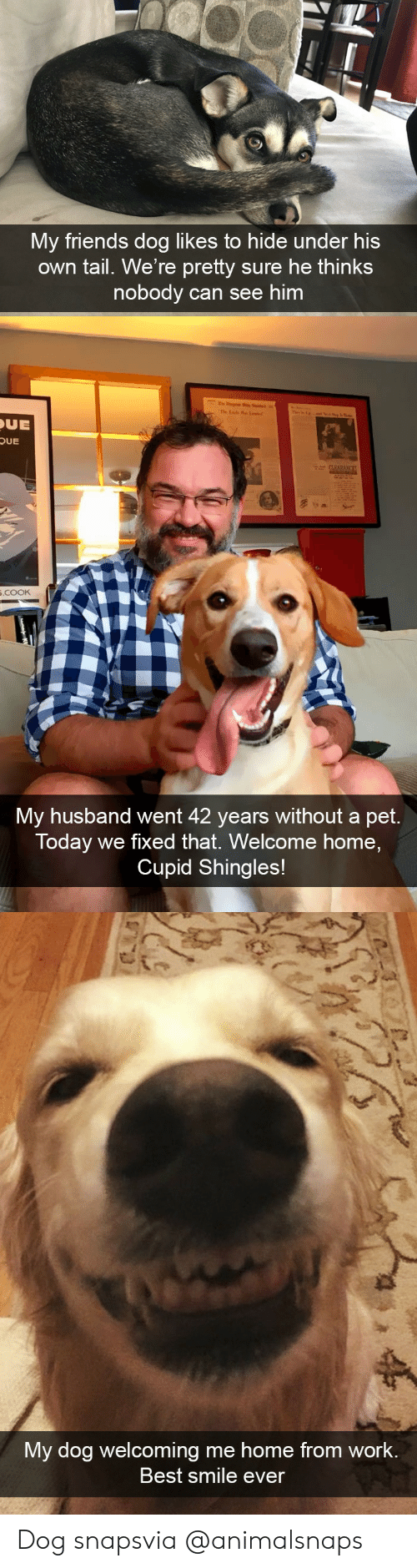 Friends, Target, and Tumblr: My friends dog likes to hide under his  own tail. We're pretty sure he thinks  nobody can see him   UE  OUE  .cooK  My husband went 42 years without a pet.  Today we fixed that. Welcome home,  Cupid Shingles!   My dog welcoming me home from work  Best smile ever Dog snapsvia @animalsnaps