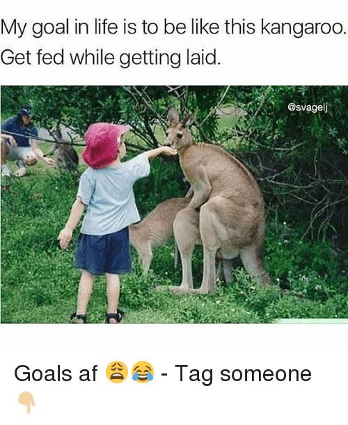 Goals In Life: My goal in life is to be like this kangaroo.  Get fed while getting laid.  @svagelj Goals af 😩😂 - Tag someone 👇🏼