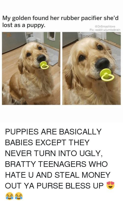 Bless Up, Memes, and Money: My golden found her rubber pacifier she'd  lost as a puppy.  @DrSmashlove  Pic: reddit u/jumbobrain PUPPIES ARE BASICALLY BABIES EXCEPT THEY NEVER TURN INTO UGLY, BRATTY TEENAGERS WHO HATE U AND STEAL MONEY OUT YA PURSE BLESS UP 😍😂😂