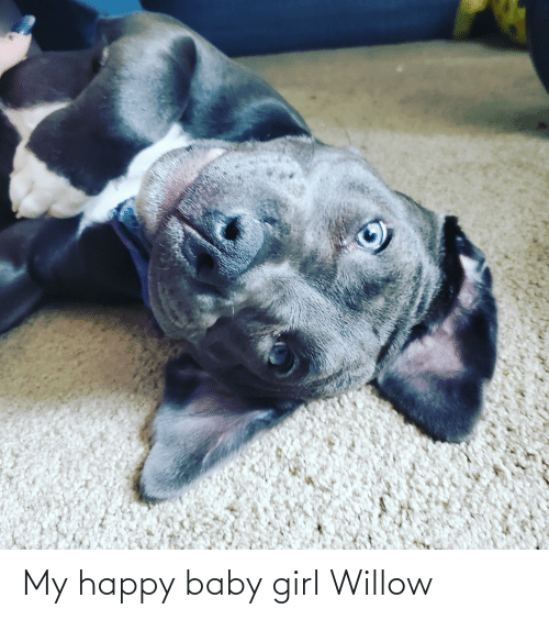 willow: My happy baby girl Willow