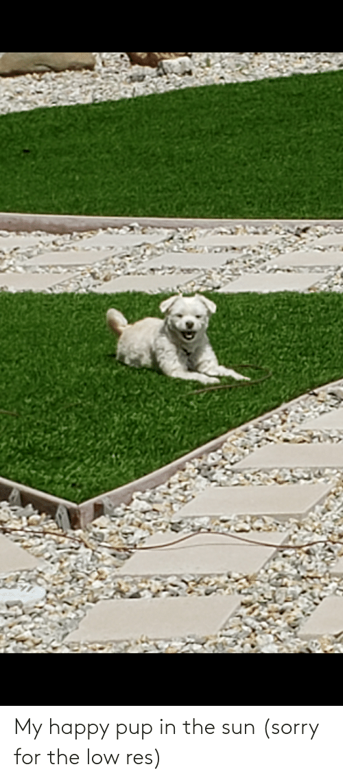 Aww Memes: My happy pup in the sun (sorry for the low res)