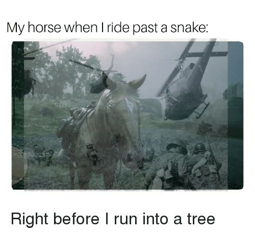 Run, Horse, and Snake: My horse when I ride past a snake: Right before I run into a tree