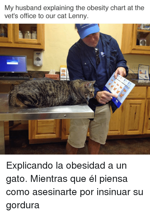 Lenny, Office, and Husband: My husband explaining the obesity chart at the  vet's office to our cat Lenny <p>Explicando la obesidad a un gato. Mientras que él piensa como asesinarte por insinuar su gordura</p>