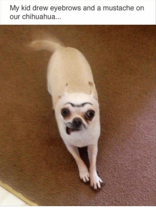 Drewing: My kid drew eyebrows and a mustache orn  our chihuahua...