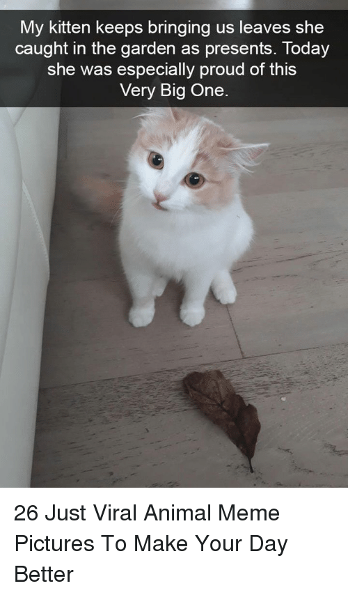 meme pictures: My kitten keeps bringing us leaves she  caught in the aarden as presents, Today  she was especially proud of this  Very Big One 26 Just Viral Animal Meme Pictures To Make Your Day Better