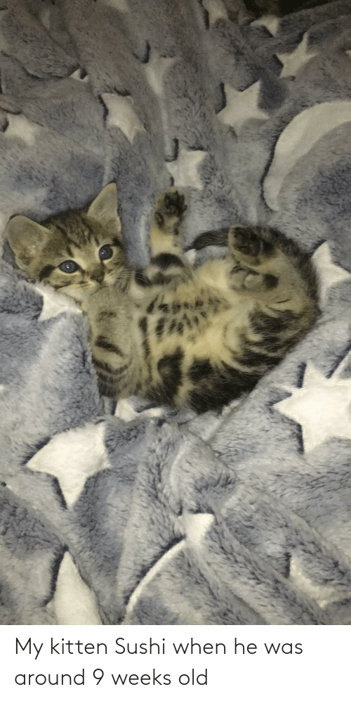 He Was: My kitten Sushi when he was around 9 weeks old