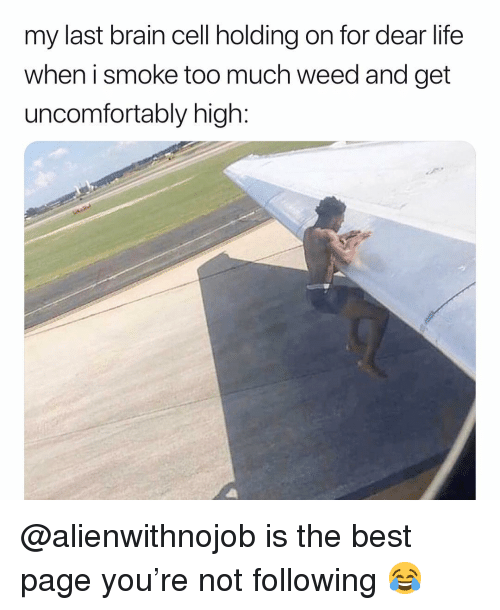 Life, Too Much, and Weed: my last brain cell holding on for dear life  when i smoke too much weed and get  uncomfortably high: @alienwithnojob is the best page you're not following 😂