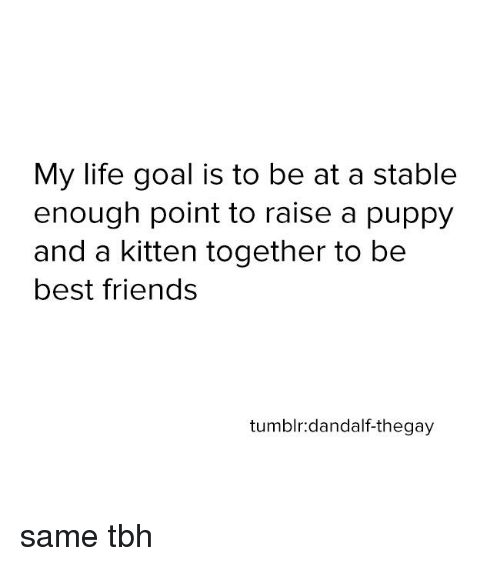 Lifes Goals: My life goal is to be at a stable  enough point to raise a puppy  and a kitten together to be  best friends  tumblr: dandalf-thegay same tbh