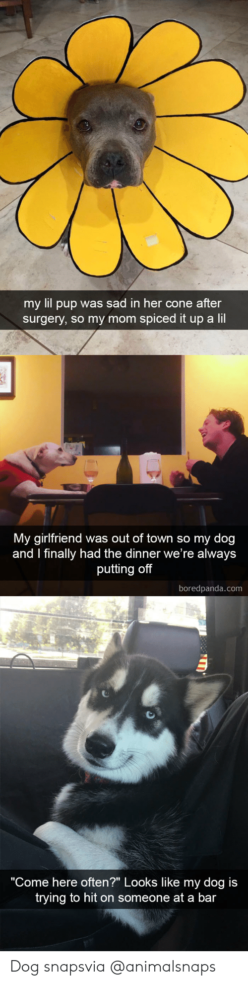 """Target, Tumblr, and Http: my lil pup was sad in her cone after  surgery, so my mom spiced it up a lii   My girlfriend was out of town so my dog  and I finally had the dinner we re always  putting off  boredpanda.com   """"Come here often?"""" Looks like my dog is  trying to hit on someone at a bar Dog snapsvia @animalsnaps"""