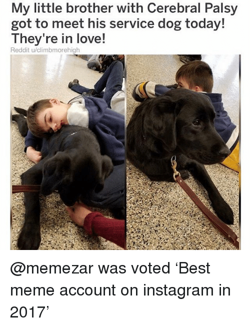 Instagram, Love, and Meme: My little brother with Cerebral Palsy  got to meet his service dog today!  They re in love!  Reddit u/climbmorehigh @memezar was voted 'Best meme account on instagram in 2017'