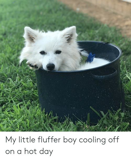 Boy, My Little, and Day: My little fluffer boy cooling off on a hot day