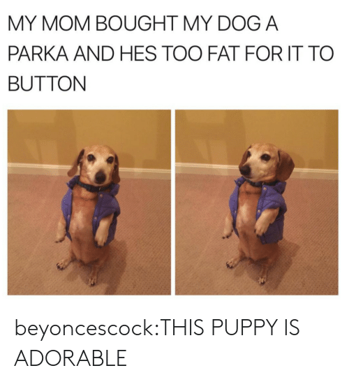 Tumblr, Blog, and Http: MY MOM BOUGHT MY DOG A  PARKA AND HES TOO FAT FOR IT TO  BUTTON beyoncescock:THIS PUPPY IS ADORABLE