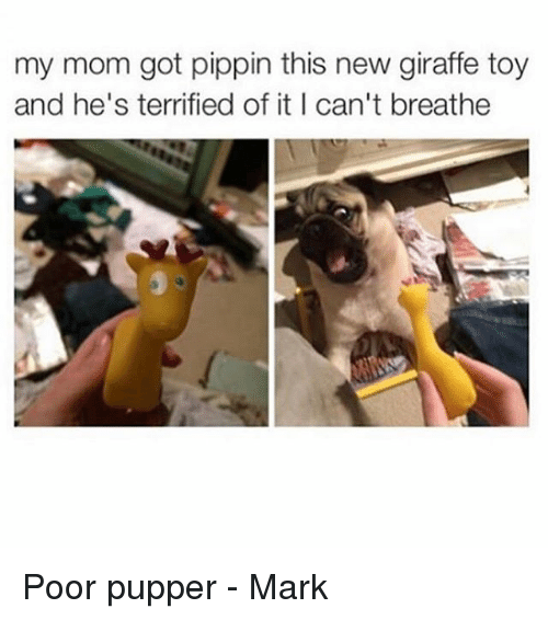 Pippin: my mom got pippin this new giraffe toy  and he's terrified of it I can't breathe Poor pupper - Mark
